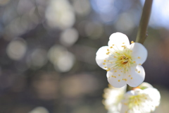 春の光溢れて