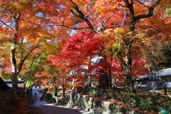 秋彩の小径