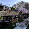 春の八幡堀