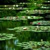 北川村 モネの庭7