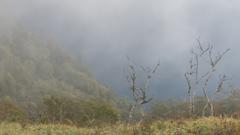 霧マニアは切り撮り重視