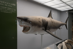 """""""JAWS"""" これが!!!【レタッチ前】【次の写真も見てね♪】【ポチ不要】"""