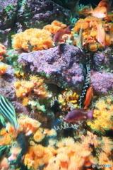 色を飾る魚たち