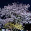 南信州桜探訪 安富桜 その1