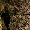 南信州桜探訪 くよとの枝垂れ桜5