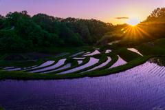 棚田の落陽