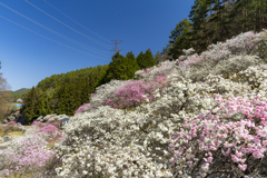 花桃の里 春爛漫