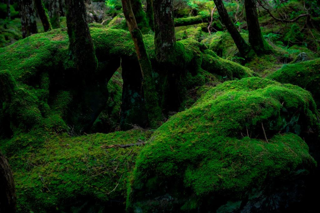 苔の世界2