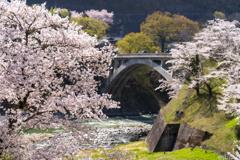 南信州桜探訪  中川の春