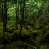 木霊の森 再アップ