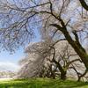 南信州桜探訪 日本一の学校桜2