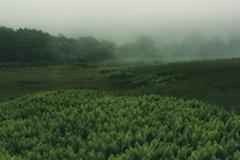 霧の霧ヶ峰 八島湿原
