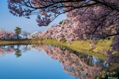 南信州桜探訪 朝の堤