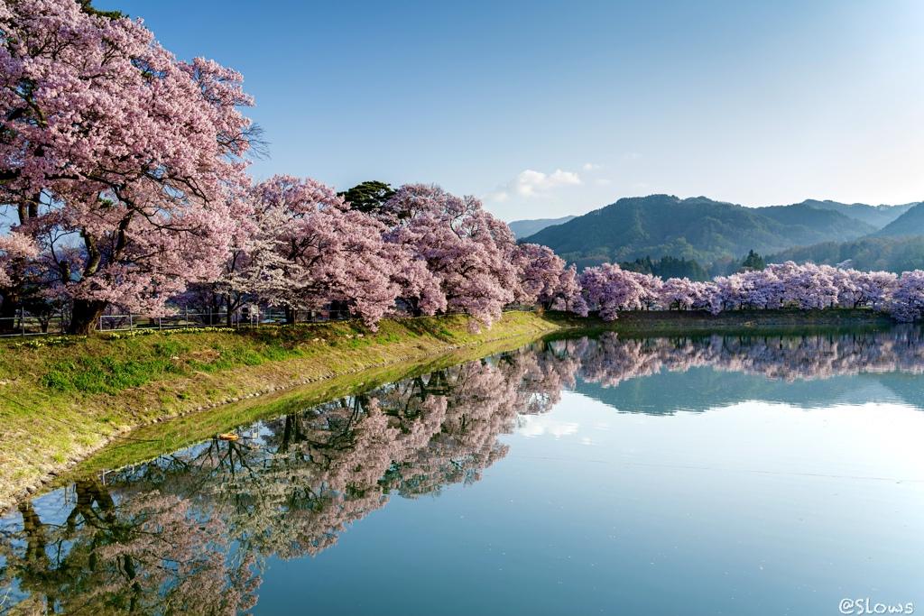 南信州桜探訪 寝坊した