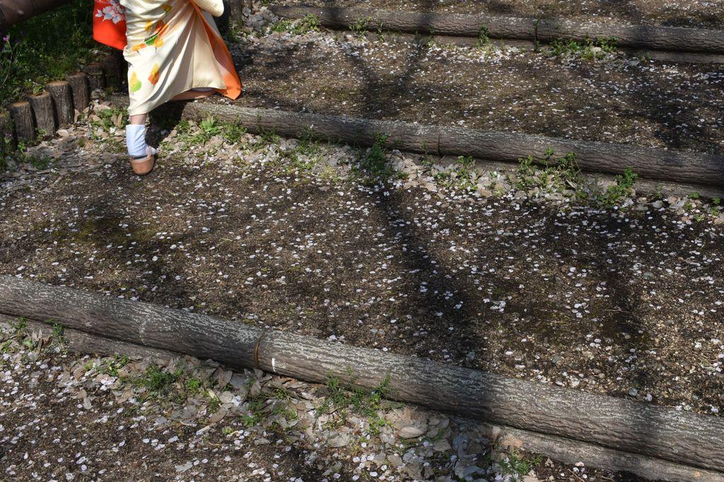 落花の階段を登る