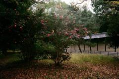 秋の京都御所6