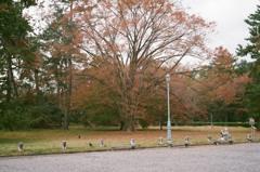 秋の京都御所4