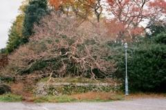 秋の京都御所7
