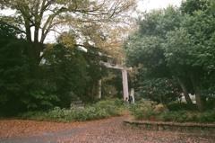 秋の京都御所5