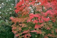 秋の京都御所8