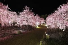 鈴鹿の森庭園ライトアップ