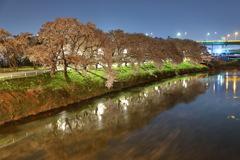 清州城の桜