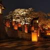 夜桜と行燈