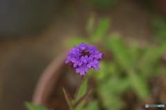 小さな花がたくさんあるのが好き
