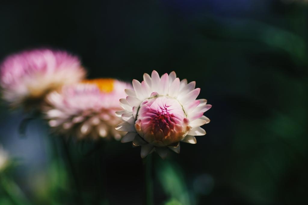硬いつぼみが咲くとき