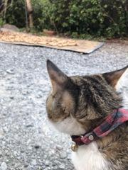 落花生を見つめる猫と猫を見つめる落花生2