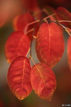 我が家の秋色ー2