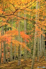 竹とモミジのコラボレーション
