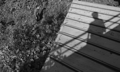 I saw the shadow