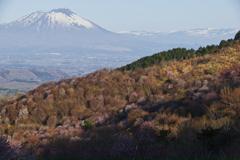 in Himekami