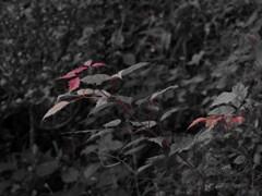 秋の始まり【Select color】