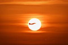 月と絡めなくて夕陽とコラボ