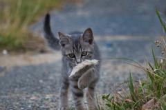 子猫の興味