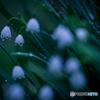 春を呼ぶ雨