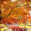 秋を駆ける