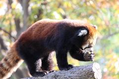 天王寺動物園での撮影