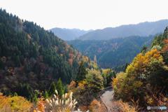 おにゅう峠への道