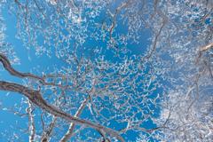 青空と樹氷