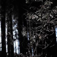 樹氷に降り注ぐ光芒