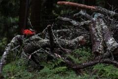 朽ちた木と彼岸花