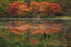 秋色映える ⅱ