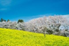 春のぶるーすかい 2