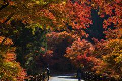 白井平橋の紅葉