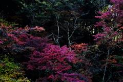 紅妖(こうよう)