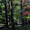 湯ノ湖散策 ⅱ