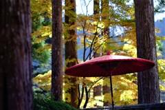 野点傘と秋 ⅱ